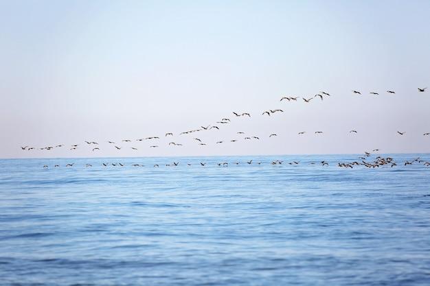 Um bando de pássaros migratórios no céu acima do mar. migração sazonal de pássaros. foco seletivo suave.