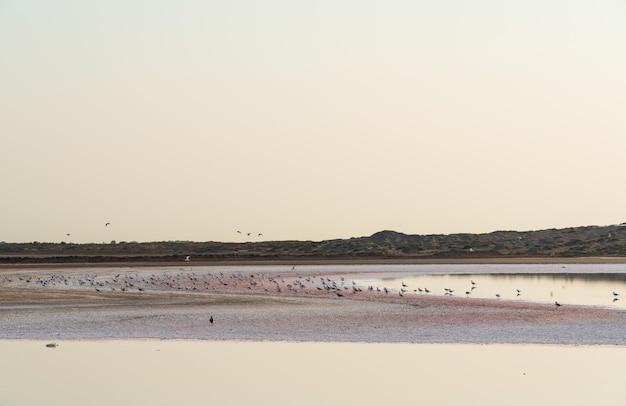 Um bando de pássaros no lago salgado