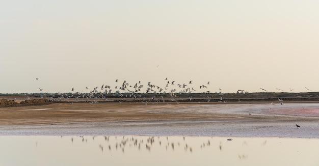 Um bando de pássaros sobre o lago salgado