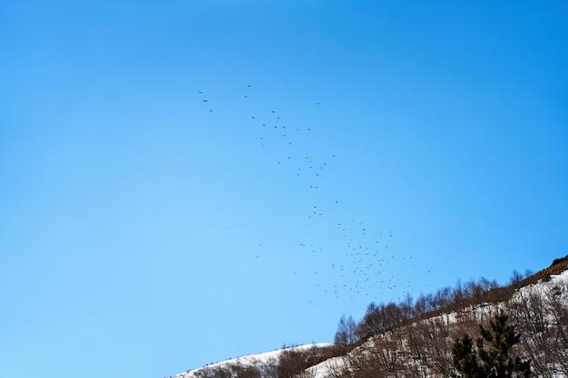 Um bando de pássaros voa na floresta de inverno, tendo como pano de fundo um céu claro.