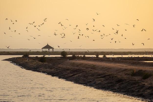 Um bando de pássaros voando sobre o oceano