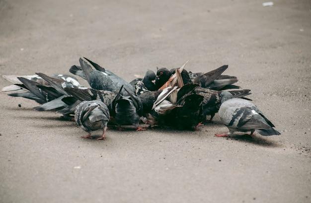 Um bando de pombos come na rua