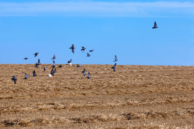Um bando de pombos voando no céu azul