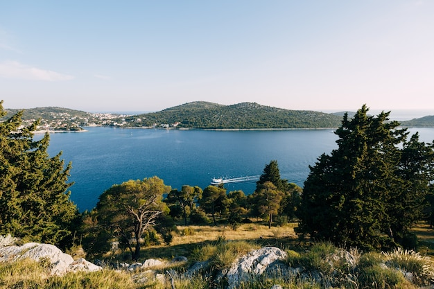 Um barco de recreio navega ao longo da costa cercado por um bando de gaivotas, árvores e grama na costa