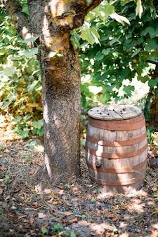 Um barril de vinho de madeira, amarrado com aros de ferro perto de uma árvore no jardim. estilo rústico original, decoração e paisagismo do local.