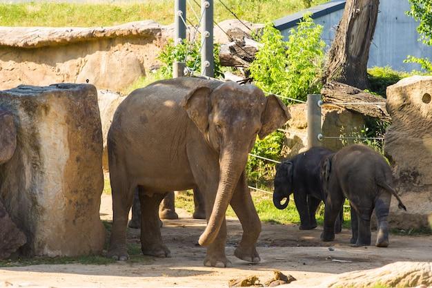 Um bebê elefantes com a mãe.