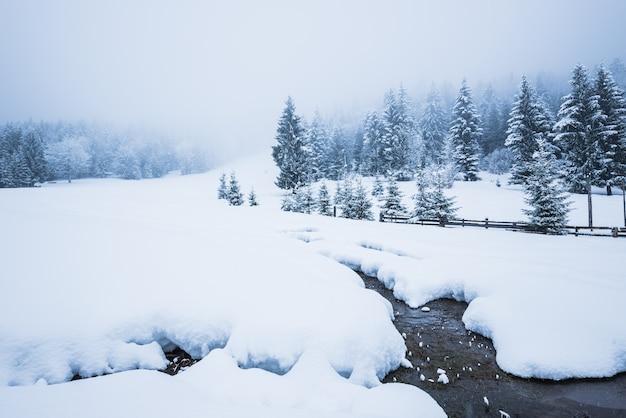 Um belo panorama de neve de um monte de neve e uma estreita faixa de rio passam pela parede de uma densa floresta de coníferas coberta de neve em um dia nublado e gelado de inverno