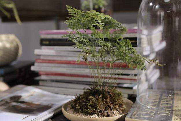 Um belo samambaia bonsai claypot na sala de leitura