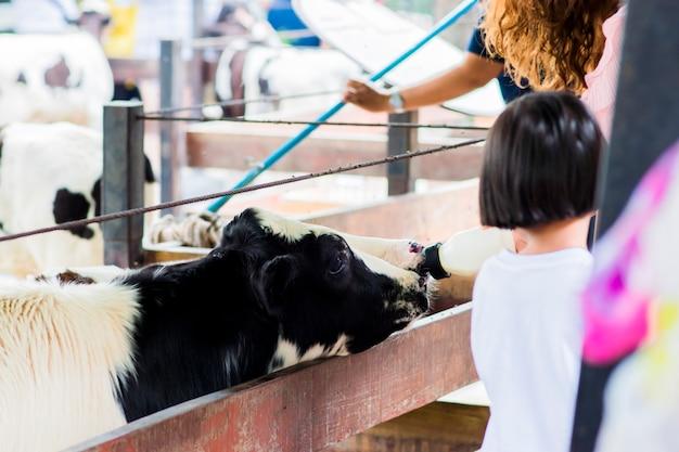 Um bezerro de vaca leiteira está bebendo leite de uma mamadeira que está sendo alimentada.