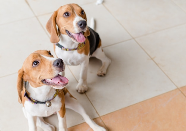 Um bonito dois cães