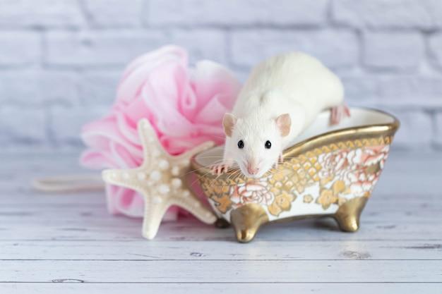 Um bonito rato decorativo branco toma banho. perto está uma estrela do mar e uma toalha rosa.