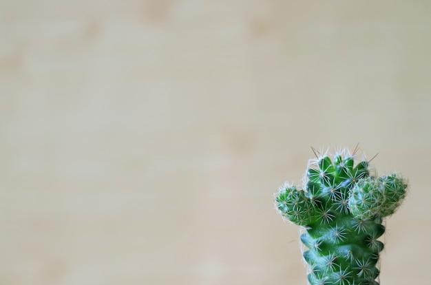Um bonito vibrante verde mini cactos