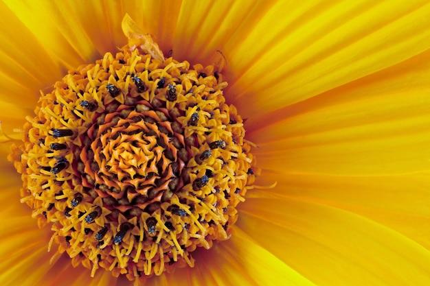 Um botão em flor é fotografado em close-up.
