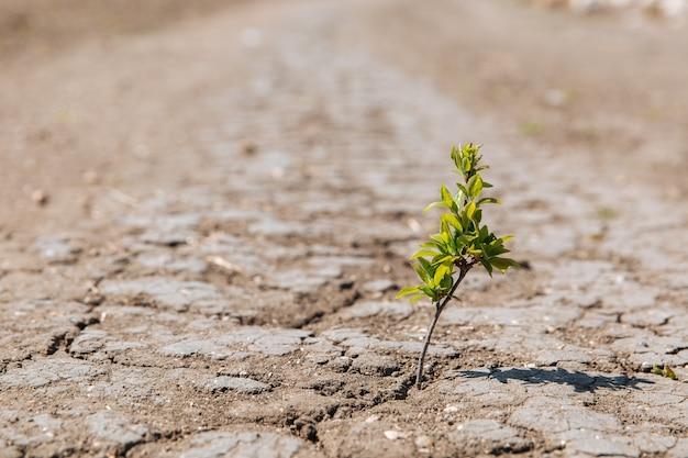 Um broto verde brota da terra seca e rachada