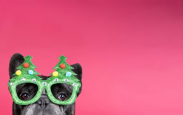Um buldogue francês fofo com óculos de natal enfiando a cabeça na cabeça