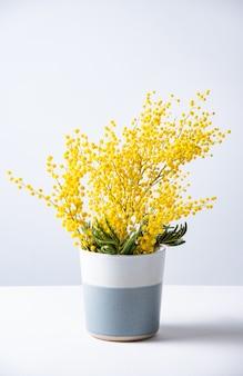 Um buquê de flores de mimosa amarela fica em um vaso de cerâmica sobre um fundo cinza.