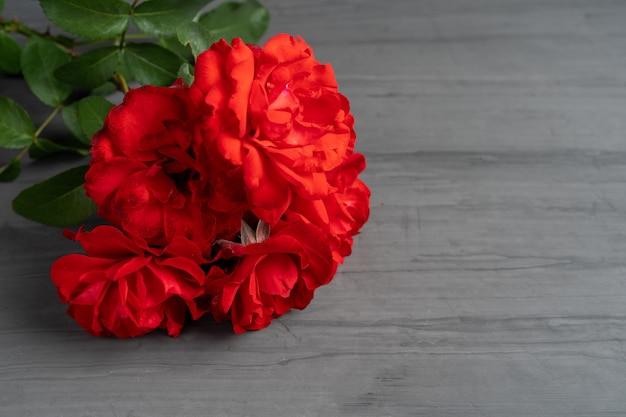 Um buquê de rosas vermelhas florescendo