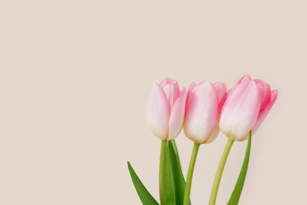 Um buquê de três tulipas cor de rosa. o conceito de férias de primavera com espaço de cópia