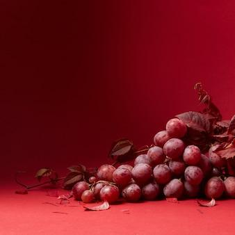 Um cacho de uvas maduras e folhas de uvas isoladas
