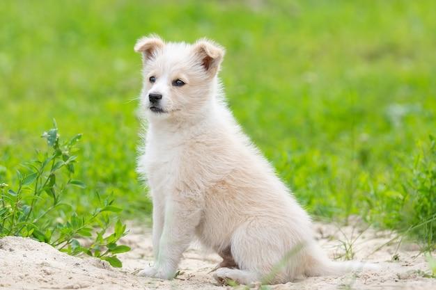 Um cachorrinho carinhoso, um menino vira-lata nesta foto, que encontrou bons donos. cor vermelha