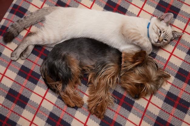 Um cachorrinho e um gatinho dormem amigavelmente em casa