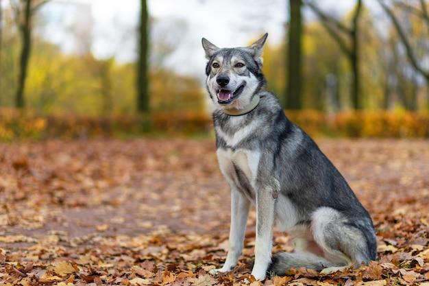 Um cachorro adorável posando no parque