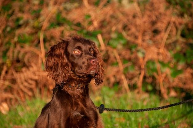 Um cachorro amarrado a um post