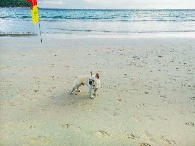 Um cachorro andando na bela praia.
