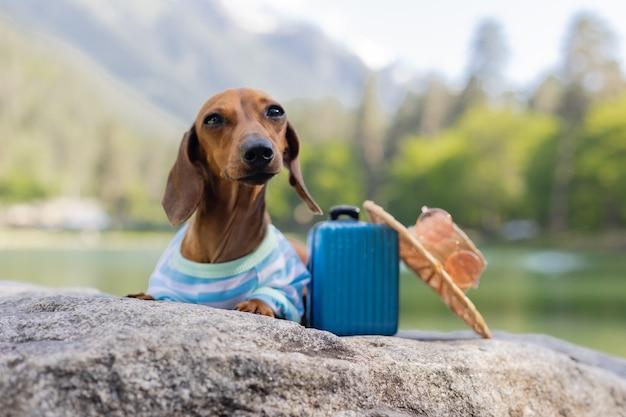 Um cachorro bassê fofo em uma viagem um cachorro bassê de óculos escuros e um chapéu de palha nas férias com animais de estimação