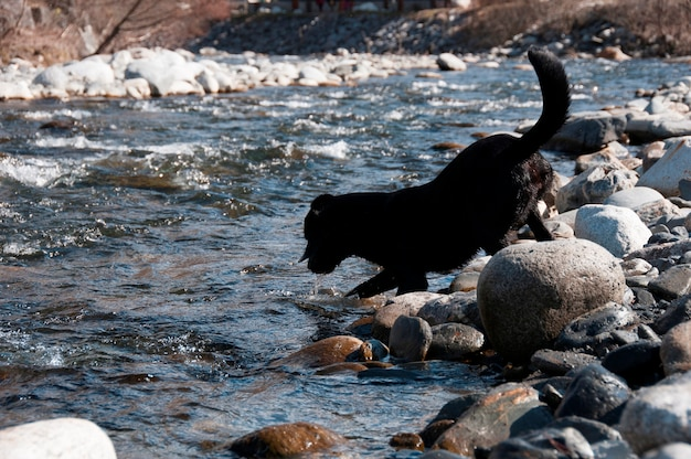 Um cachorro brincando na beira da água