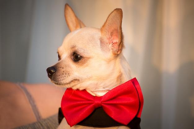 Um cachorro com roupas elegantes.