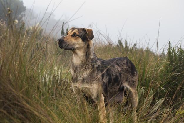 Um cachorro de rua magricela parado em um campo gramado durante o dia