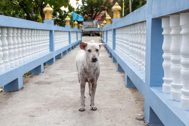 Um cachorro de rua