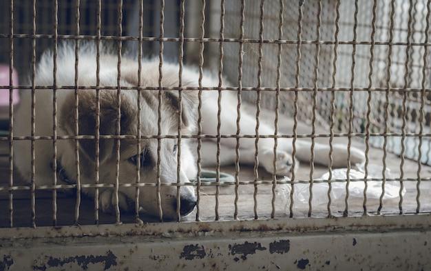 Um cachorro dorme em uma gaiola e se sente sozinho.