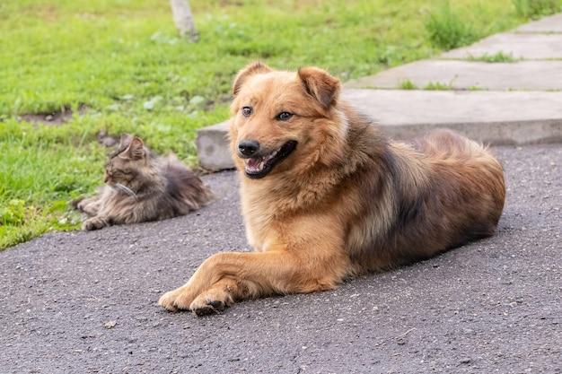 Um cachorro e um gato estão deitados lado a lado no asfalto perto da grama