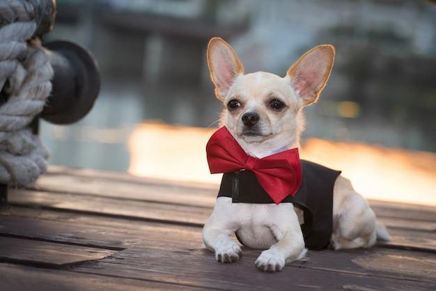 Um cachorro em roupas da moda com uma borboleta