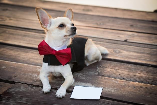 Um cachorro em roupas da moda.
