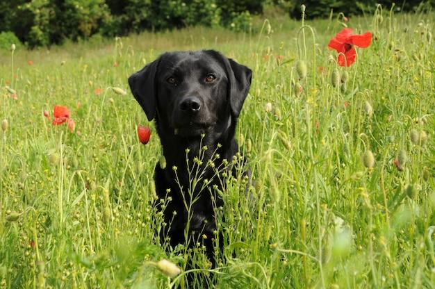 Um cachorro em um campo.