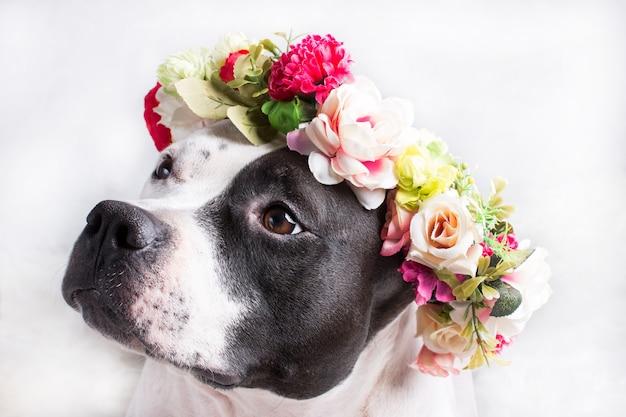 Um cachorro em uma coroa de flores
