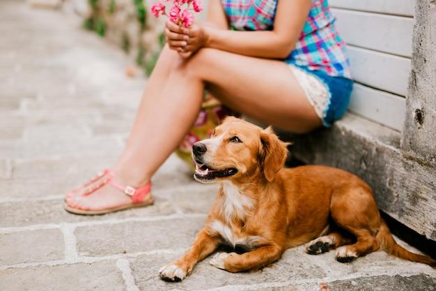 Um cachorro na cidade está esperando pelo dono