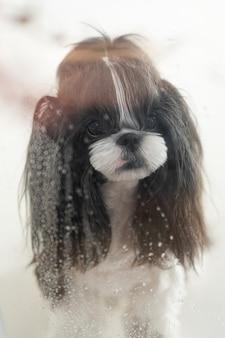 Um cachorro olhando para a chuva da janela