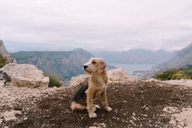 Um cachorro peludo está sentado no chão com a baía de kotor ao fundo