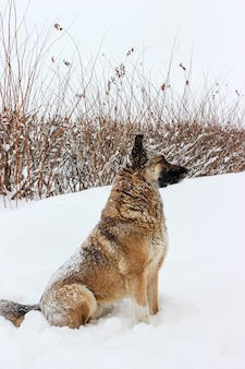 Um cachorro perdido na neve