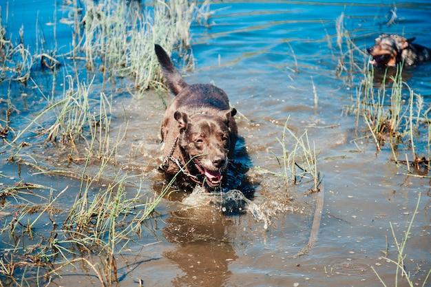 Um cachorro preto em um lago