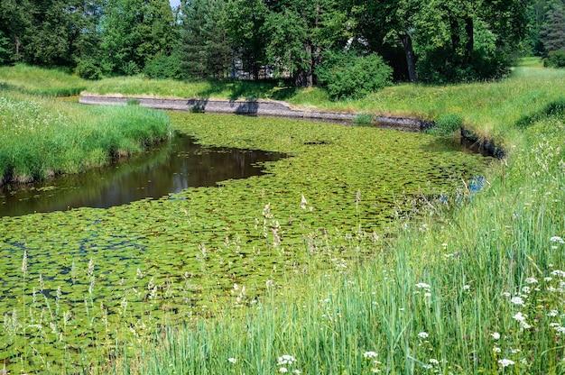 Um calmo rio florestal coberto de nenúfares em um belo ambiente de vegetação. landhavt natural de verão com um rio e nenúfares. paisagem natural de primavera com lago ou rio no parque