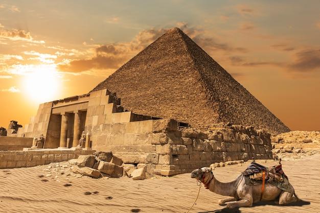 Um camelo perto da mastaba de seshemnefer iv e da pirâmide de khufu, gizé, egito.