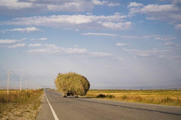 Um caminhão cheio de grama dirigindo na estrada no verão.