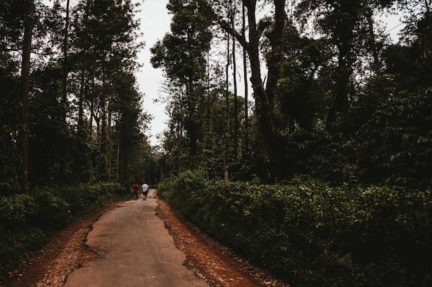 Um caminho através de um jardim verde