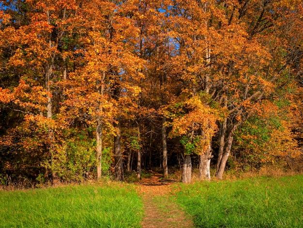 Um caminho de entrada para a floresta de outono brilhante.