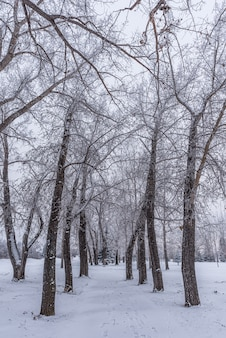 Um caminho de geada hoar coberto de árvores